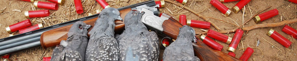 High Volume Pigeon Hunting in Argentina