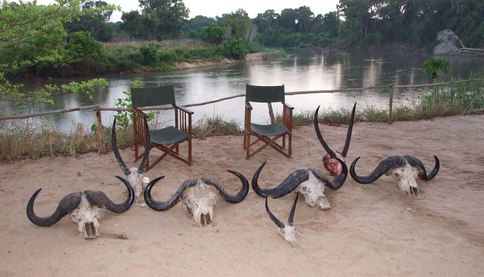 African Safari Skulls