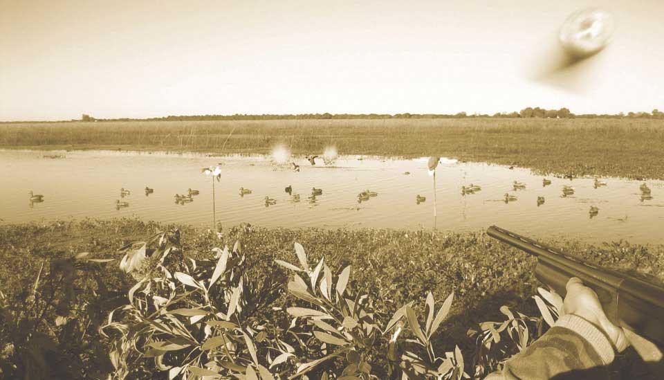 Argentina Duck Shooting