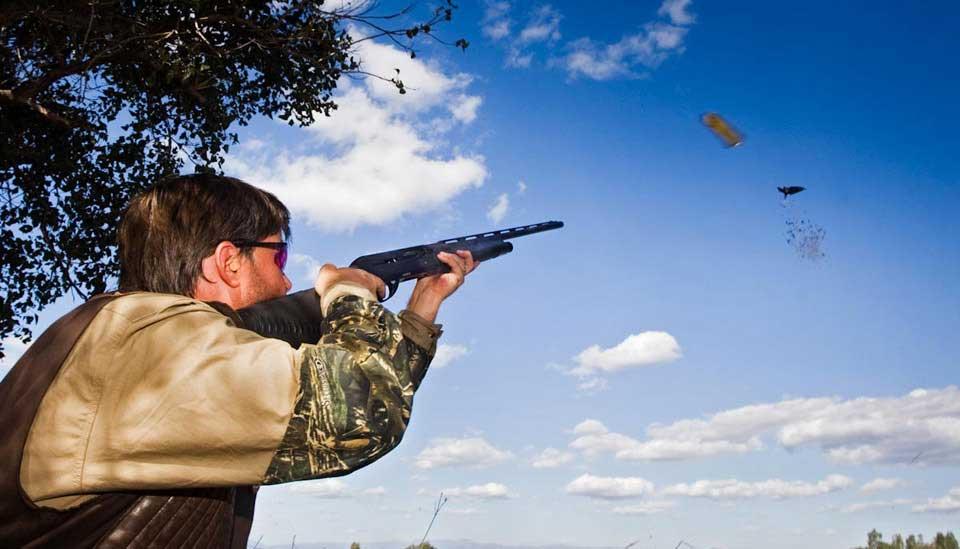 Argentina Pigeon Hunter