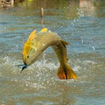 Argentina Sport Fishing
