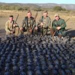 Cordoba Pigeon Season