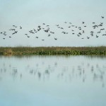 San Jose Argentina Waterfowl
