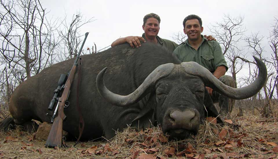 Trophy Water Buffalo