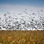 World's Best Dove Hunting