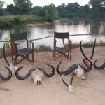 African Safari Trophies on Display